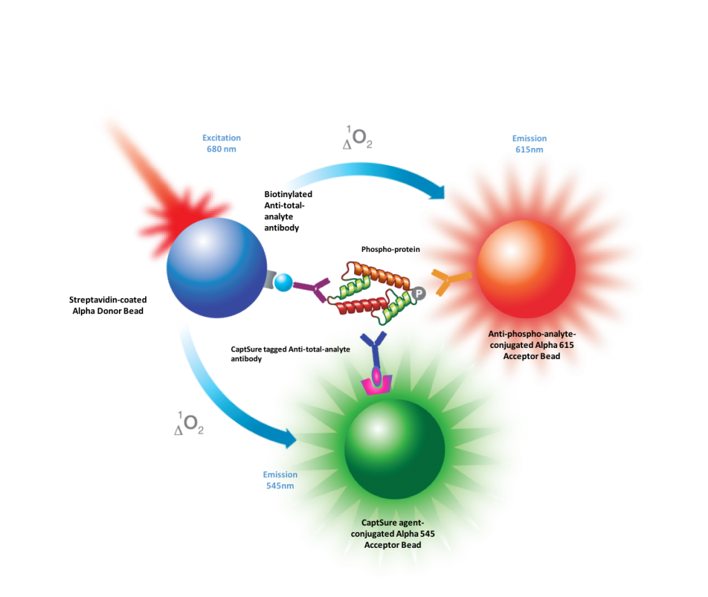 Measurement of phospho and total protein targets