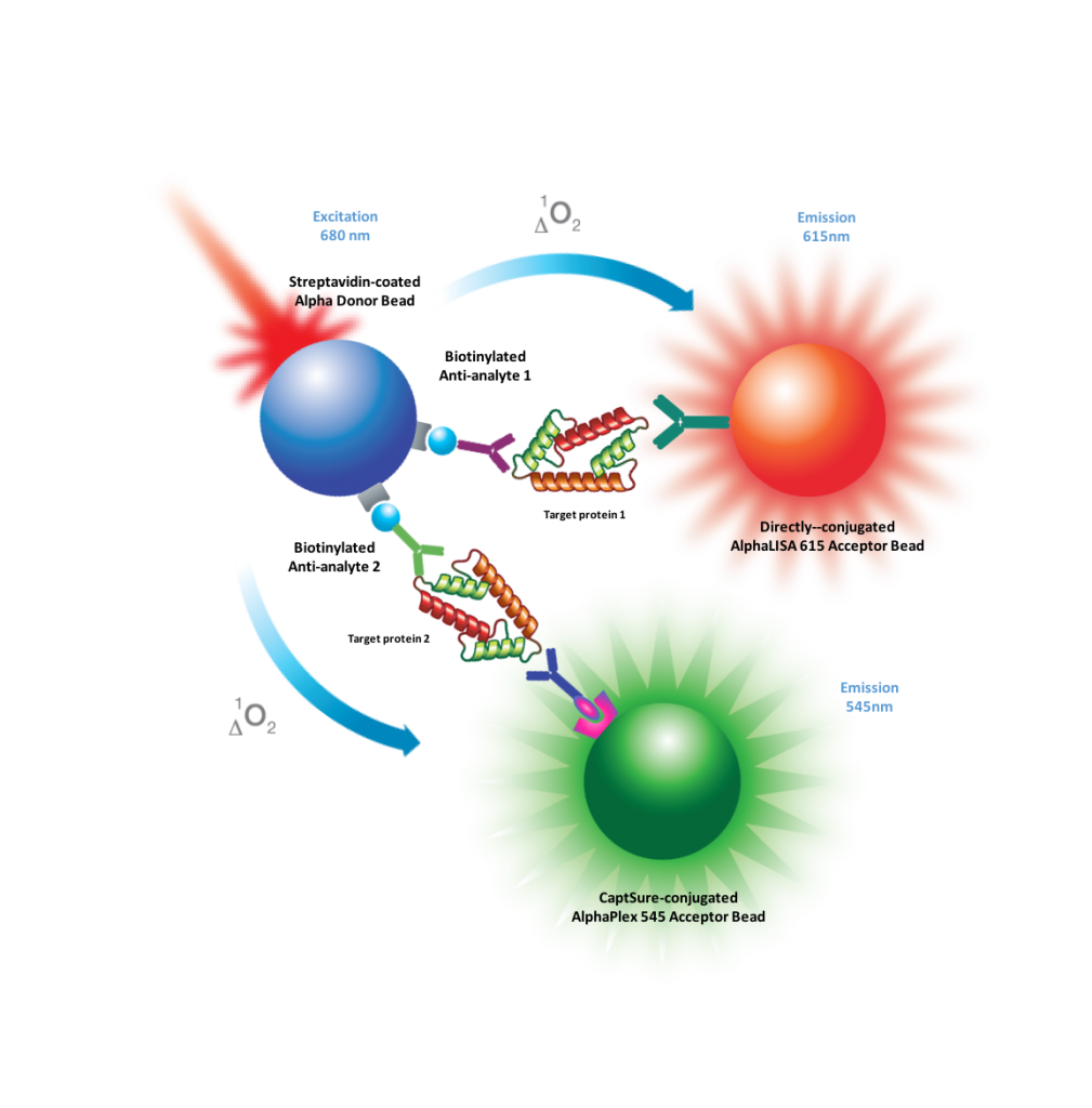 Measurement of two phosphoprotein targets